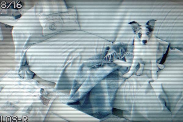 R – 3ollos R – Control de mascotas